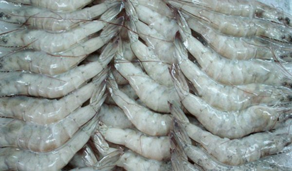 Pacific white shrimp
