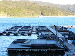fish farms japan
