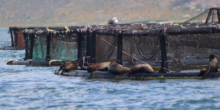 seals in cages