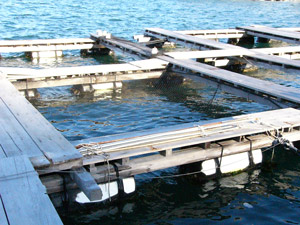 fish farms sea cages Japan
